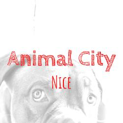 Animal City And Co